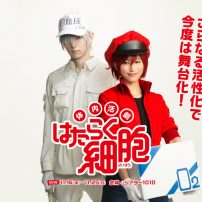 Cells at Work! Stage Play Actors Work Hard in Poster Visual
